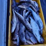 川白沖の釣果、千漁丸
