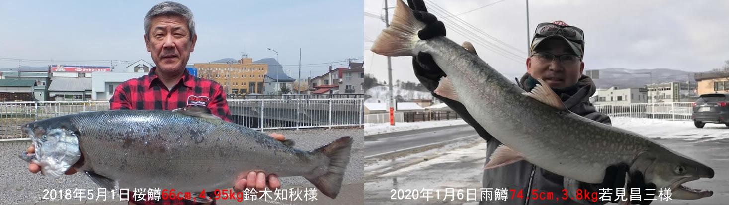 鈴木さんの大物桜鱒と若見さんの大物雨鱒