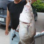 千葉さんが釣った本日最大の真ダラです
