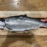 堀隆義さんのサクラマスは62.5cm,3.75kg